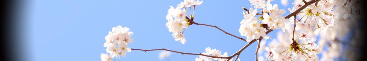 石川のお花見スポット