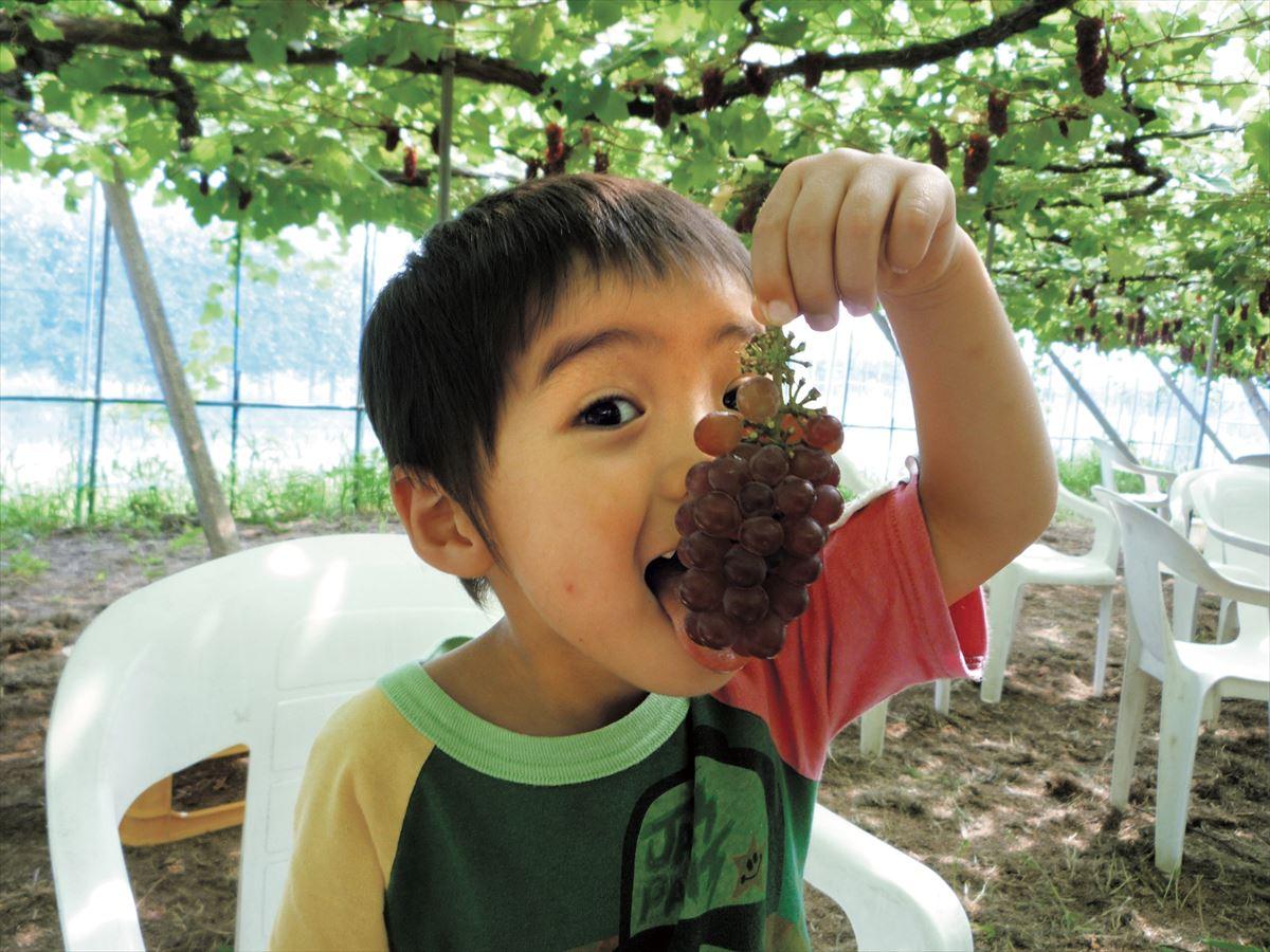 観光農園加賀フルーツランド