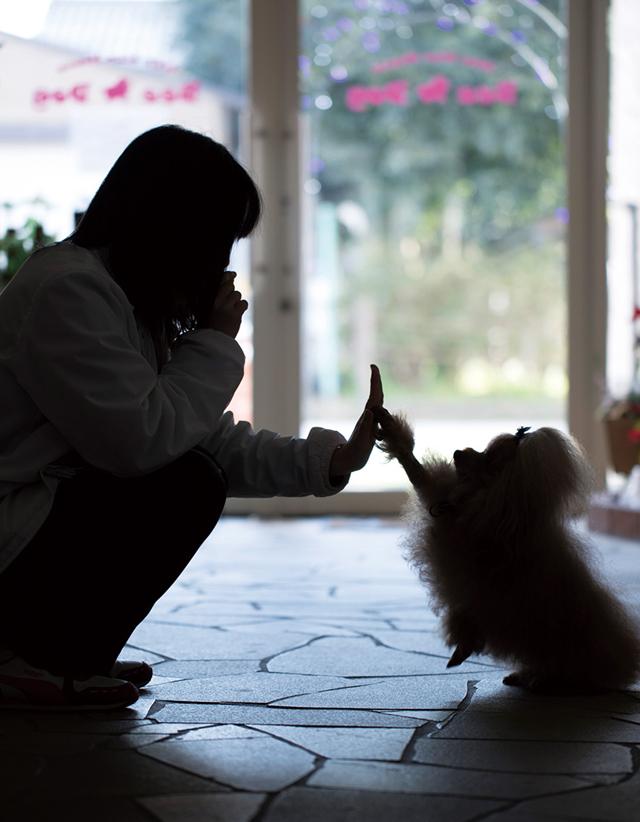 わんこの保育園&美容室・ペットホテルWan Wan House Bee Dog