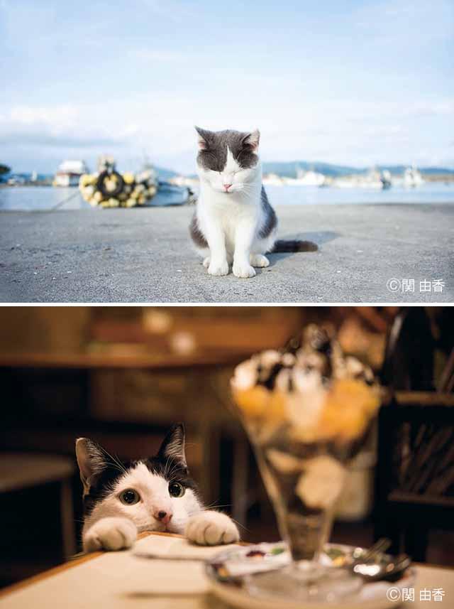 ねこ写真家 関 由香 写真展「ねこうらら」