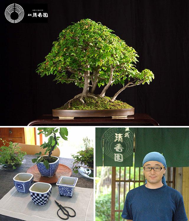 林檎舎アップルカンパニー ワークショップ「盆栽とお茶時間」