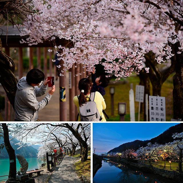 第10回 庄川峡桜まつり