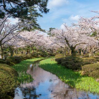 観桜期の無料開園&ライトアップ