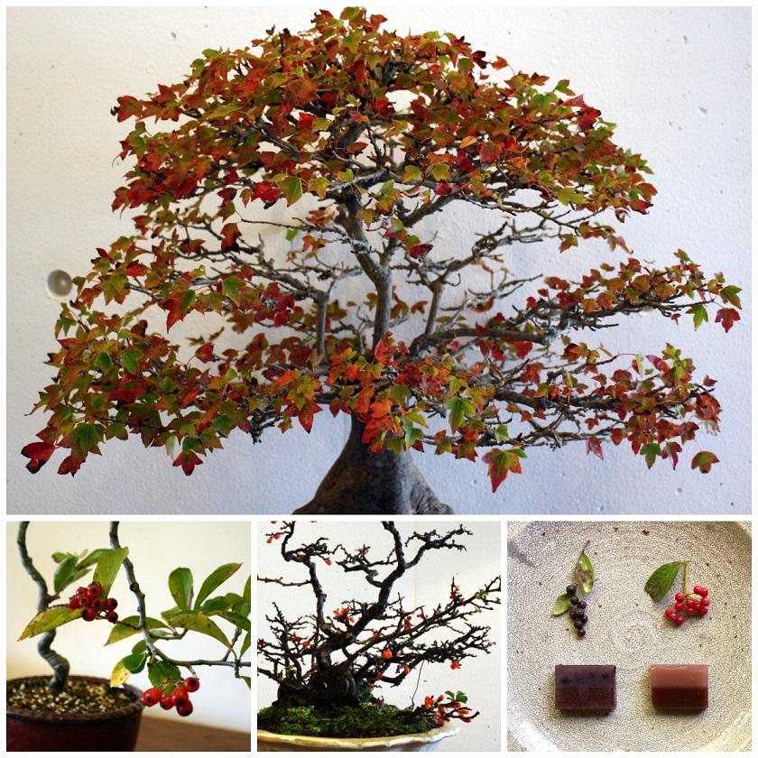 ギャラリー林檎舎 秋のインテリア盆栽展